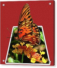 Breakout Butterfly Acrylic Print