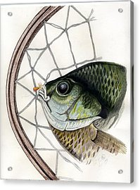 Bream And Net Acrylic Print by H C Denney