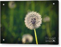 Breath Acrylic Print by Alessandro Giorgi Art Photography