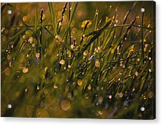 Breath Of Rain Acrylic Print