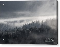 Acrylic Print featuring the photograph Breath Of The Forest by Yuri Santin