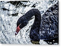 Breathless Beauty 1  Acrylic Print by Naomi Burgess