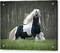 Breathtaking Stallion Acrylic Print by Terry Kirkland Cook
