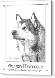 Breed Poster Alaskan Malamute Acrylic Print by Tim Wemple