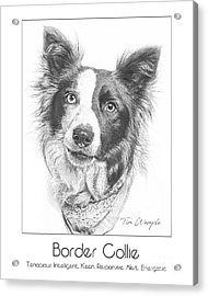 Breed Poster Border Collie Acrylic Print by Tim Wemple