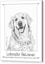 Breed Poster Labrador Retriever Acrylic Print by Tim Wemple