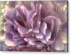 Breeze In Deep Pink Acrylic Print