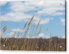 Breeze Acrylic Print