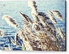 Breezy Days Acrylic Print by Ariane Moshayedi