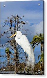 Breezy Egret Acrylic Print