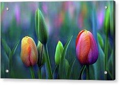 Breezy Acrylic Print by Jessica Jenney