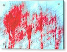 Acrylic Print featuring the photograph Breezy Moment by Ari Salmela