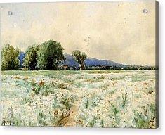 Bricher Alfred Thompson The Daisy Field Acrylic Print