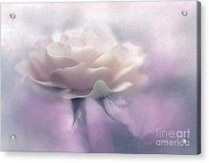 Bridesmaid Rose Acrylic Print by Jean OKeeffe Macro Abundance Art