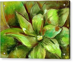 Bright Agave Acrylic Print by Marilyn Barton