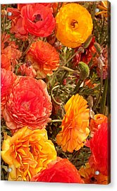 Bright And Sunny Acrylic Print by Jean Booth