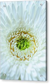 Acrylic Print featuring the photograph Bright As A Lime by Christi Kraft