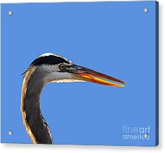 Acrylic Print featuring the photograph Bright Beak Blue .png by Al Powell Photography USA