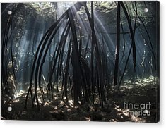 Bright Beams Of Sunlight Filter Among Acrylic Print by Ethan Daniels