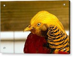 Bright Bird Acrylic Print