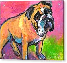 Bright Bulldog Portrait Painting  Acrylic Print by Svetlana Novikova