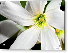 Bright Center Acrylic Print by Christopher Holmes