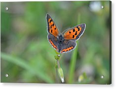 Bright Copper Acrylic Print
