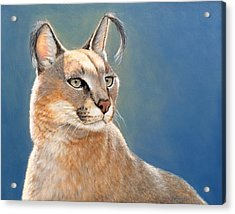 Bright Eyes - Caracal Acrylic Print