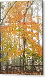 Bright Fall Acrylic Print by Sallie Woodring