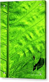 Bright Green Leave With An Insect Crawling Over Its Surface Acrylic Print by Sami Sarkis