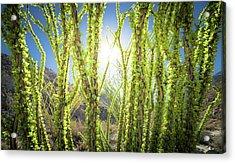 Bright Light In The Desert Acrylic Print