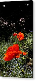 Bright Orange Acrylic Print by Renate Nadi Wesley