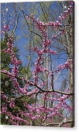 Bright Pink Rosebud Flowers Acrylic Print by Brendan Reals