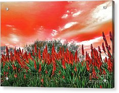 Acrylic Print featuring the photograph Bright Red Aloe Flowers By Kaye Menner by Kaye Menner