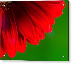 Bright Red Chrysanthemum Flower Petals And Stamen Acrylic Print by John Williams