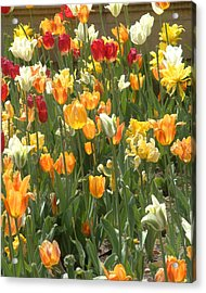 Acrylic Print featuring the photograph Bright Tulips by Michael Flood