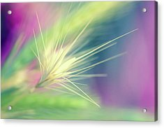 Bright Weed Acrylic Print by Terry Davis