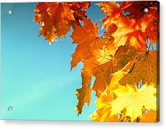 The Lord Of Autumnal Change Acrylic Print by John Williams