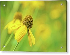 Bright Yellow Flower Acrylic Print by David Stasiak