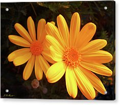 Brighten Your Day Acrylic Print by Michael Durst