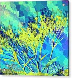 Brighter Day Acrylic Print by Shawna Rowe