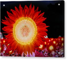 Brighter Than The Sun Flower Acrylic Print
