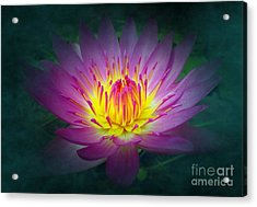 Brightly Glowing Lotus Flower Acrylic Print