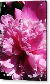 Acrylic Print featuring the photograph Brillant Pink Peony by Bruce Bley