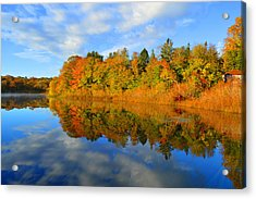 Brilliance Of Autumn Acrylic Print by Dianne Cowen