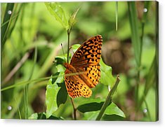 Brilliant Butterfly Acrylic Print