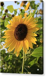 Brilliant By Association Acrylic Print by Alan Rutherford