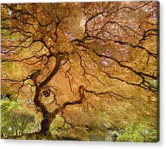 Acrylic Print featuring the photograph Brilliant Japanese Maple by Wanda Krack