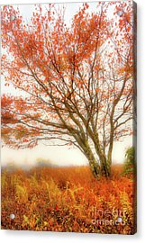 Acrylic Print featuring the photograph Brilliant Orange Autumn Fall Colors Tree by Dan Carmichael