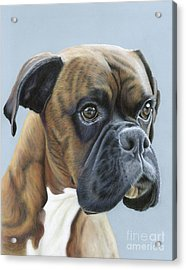 Acrylic Print featuring the painting Brindle Boxer Dog - Jack by Donna Mulley